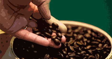 Full 100 Arabica Coffee Brands: Our Choices