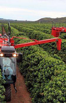 Brazilian Minas Gerais Coffee - Cerrado Mineiro