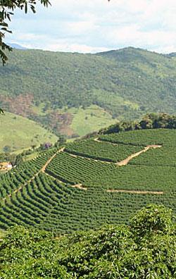 Brazilian Coffee Santos